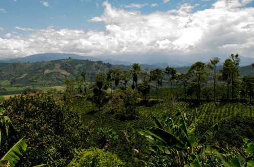 View from Finca