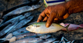 Fish Markets of the World: A Photo Essay